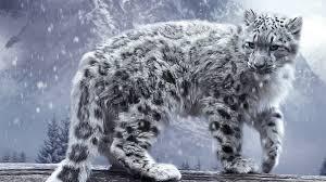 И́рбис, или сне́жный барс, или снежный леопард[2] (лат. Uncia uncia, по другой классификации — Panthera uncia) — крупное хищное млекопитающее из семейства кошачьих, обитающее в горных массивах Центральной Азии. Ирбис отличается тонким, длинным, гибким телом, относительно короткими лапами, небольшой головой и очень длинным хвостом.