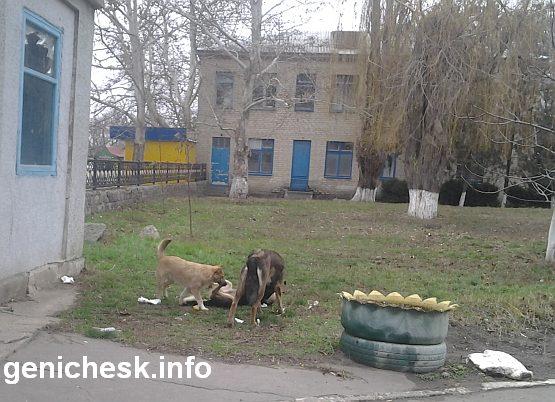 Будьте осторожны - на территории генической больницы всегда находятся стаи бродячих собак