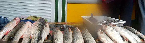 Пеленгас на геническом рынке торгуется от 50 гривен за кило