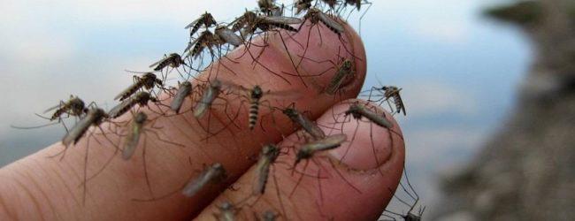 Борьба с комарами на Арабатской стрелке - французское ноу-хау в помощь